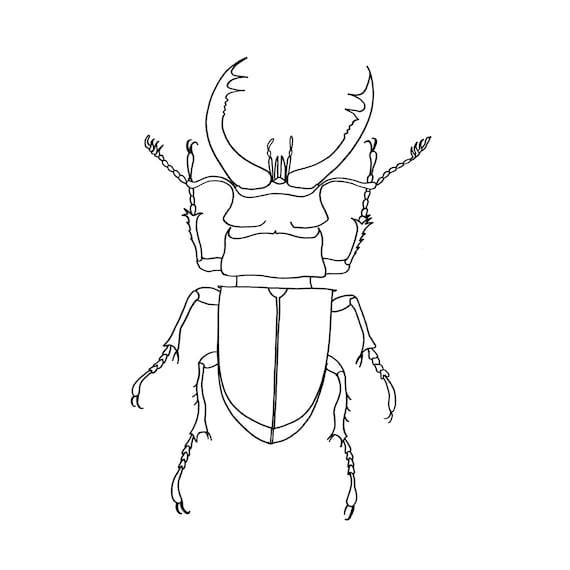 stag beetle fine art print line drawing insect by e23graphics