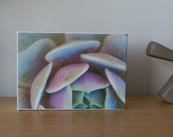 Succulent canvas