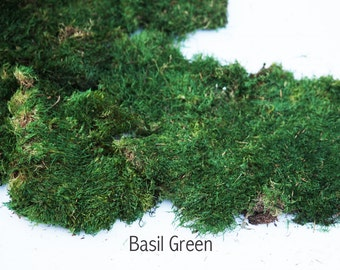 1 lb Preserved Moss in Dark Green. 2 colors to choose from.