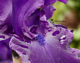Purple Bloom, Macro Photography, Nature Photography