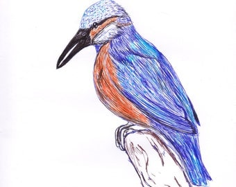 Kingfisher Pen Illustration Print A4