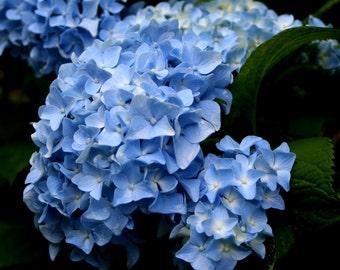 Big Baby Blue