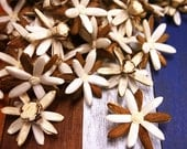 60 Rangoon-Creeper Sola Wood Diffuser Flowers 4.5 cm Dia.