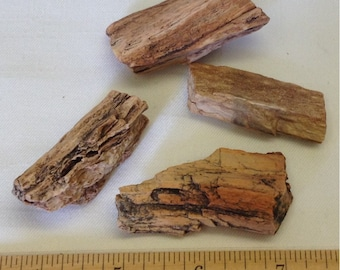 Petrified Wood Lot A6 - For Wire Wrapping - Pendant - Jewelry Supply  - Craft Supply - Earthy -
