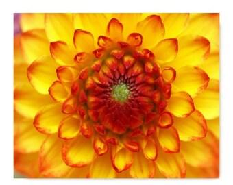 Orange Chrysanthemum Print