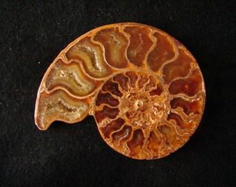 Petrified Ammonite Belt Buckle
