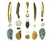 Beachcombing series No.69 - 8x10 photograph - shark or skate egg case, shells, feather, sand dollar, seashells, driftwood, Maine