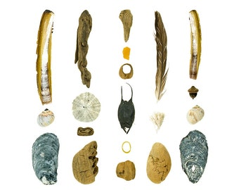 Beachcombing series No.69 - 8x10 photograph - shark or skate egg case, shells, feather, sand dollar, seashells, driftwood, Maine