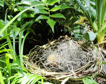 Rustic Easter Decor, Wild Vine Basket Nest, Garden Pod, Nature Inspired Decor, Baby Shower Decoration, Small, Home Decor Basket, NST