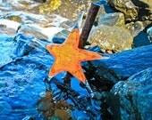 Orange and Yellow Sea Sta...