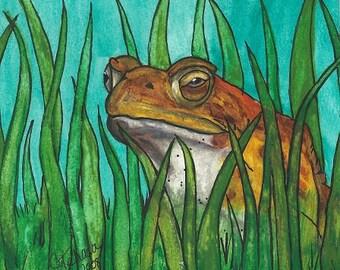 Old man frog - 1