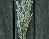 Air Dried Organic Rescuegrass Bunch