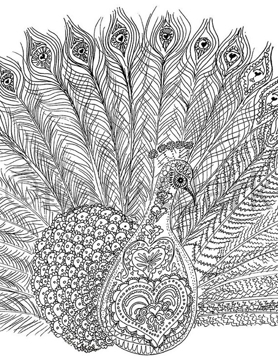 Peacock Adult Coloring Page DIGITAL File