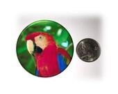 Parrot Fridge Magnet Parrot Scarlet Red Locker Magnet  2 1/4 inches in Diameter (71)