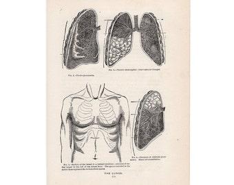 1901 LUNGS lithograph original antique medical human anatomy print