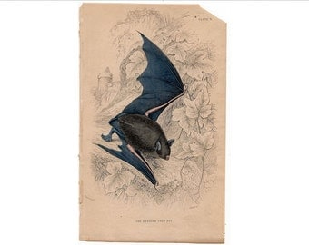 1845 BAT ENGRAVING - reddish grey bat original antique engraving creepy print for halloween