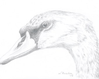 Original ACEO, Bird ACEO, Silverpoint ACEO, Art Card, Silverpoint Drawing, Swan Drawing, Collectible Art, Miniature Art, Unframed Art