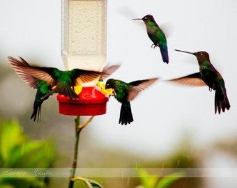 Humming birds festival