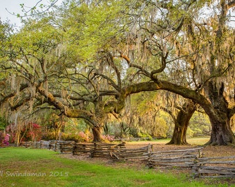 Charleston South Carolina Live Oaks Split Rail Fence Azaleas
