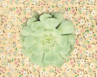 Succulent Photography, Green Botanical Print, Succulent Wall Art, Green Succulent Art, Succulent Decor, Yellow Colorful Art, Succulent Print