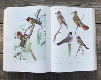 Vintage 1936 Birds of America Illustrated Bird Book