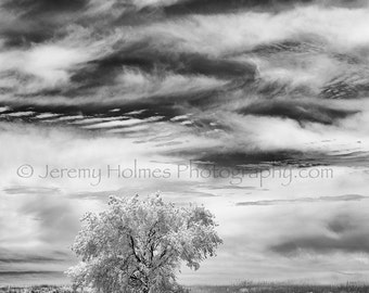 Black and white Infrared photography of a lone tree