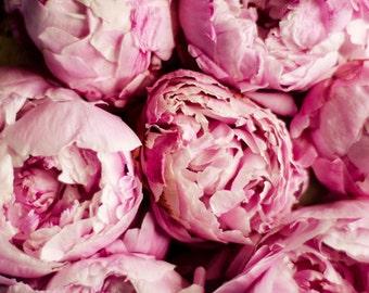 peony art print, pink flower art, romantic flower art, floral nursery art, girls room decor, shabby flower art,pink wall decor,cottage decor