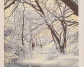 Winter, Snow Scene, Snowy River - Linen Postcard - Unused (B)