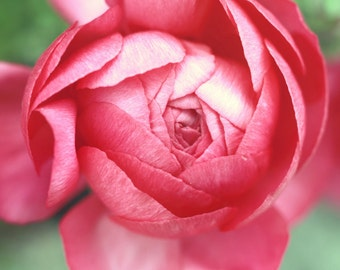 Pink Peony Photograph, Peony Print, Pink Flower Photograph, Fine Art Photography, Nature Photography, Flower Photography, Peony Home Decor