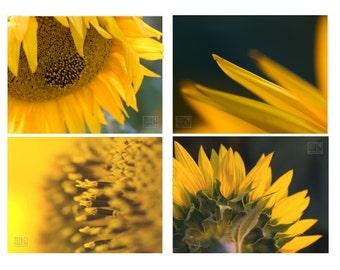 Sunflower print, Yellow modern art, Set of 4 prints, Macro photography, Engagement gift, Nature photography,Flower print,Botanical print set