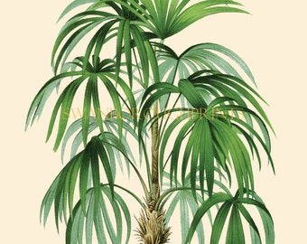 Vintage Illustration of a Tropical Palm Tree. Beach Style Coastal Home Decor. Vintage Palm Tree Digital Print. Beach Bathroom Home Decor.