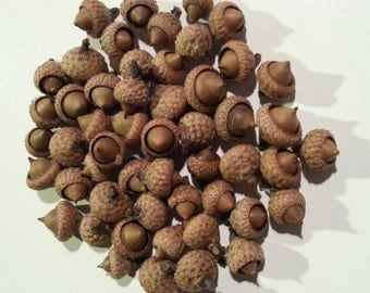Small Acorns - Qty 50