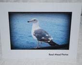 photo card, Seagull photography