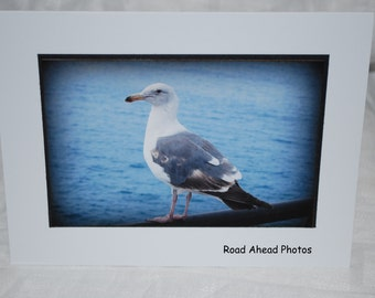photo card, Seagull photography