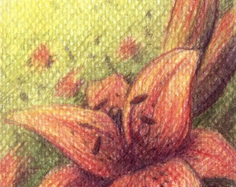 Original Drawing ACEO ATC with Red Lily