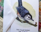 "White-Breasted Nuthatch- 4""x6"" Greeting Card Print of Pen and Ink Watercolor Bird Drawing"