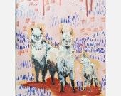 9x12 alpaca staredown
