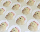 "Chicks in Hats Stickers Chick in A Miniature Pink Lace Hat Chicken Sticker Seals 1.5"" Round (12)"