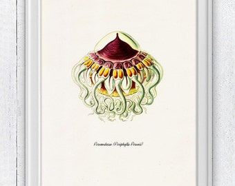 Jellyfish Peromedusae in pink side view - Wall decor poster ,  sea life print- Marine  sea life illustration A4 print SAS170