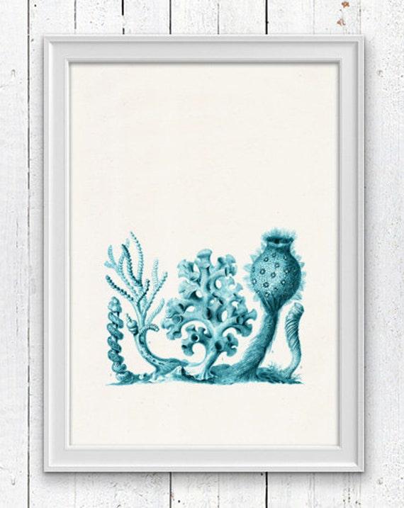 Turquise  Coral forms  - Antique Illustration  , Historical sea life print-Marine  sea life illustration A4 print SPC066
