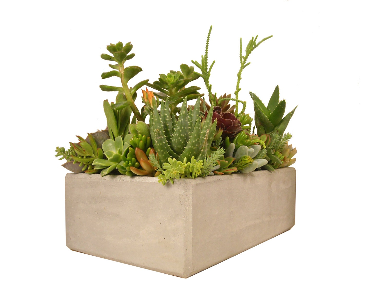 Succulent centerpiece arrangement concrete planter 12 x 8 grey rectangular modern minimalist - Rectangular succulent planter ...