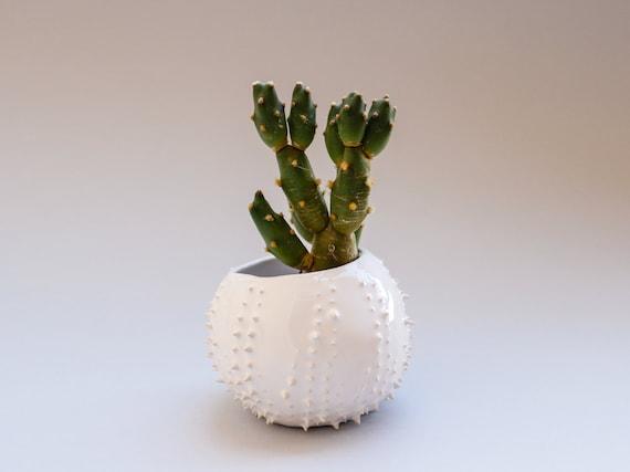 handmade ceramic petit succulent planter flower by oliscupboard. Black Bedroom Furniture Sets. Home Design Ideas
