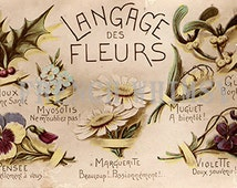 Antique Romantic French Postcard - The Language of Flowers, Sentimental, Vintage, Old, , Digital Download, High Res Image