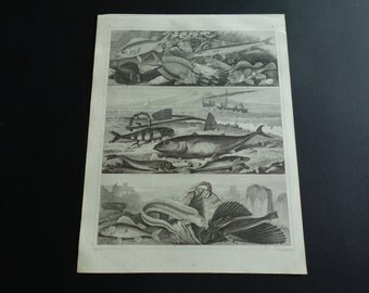 "Antique fish print - original 160+ years old poster - vintage b/w pictures of fishes poisson fischen vis vissen III - 9x12"" 23x30c"