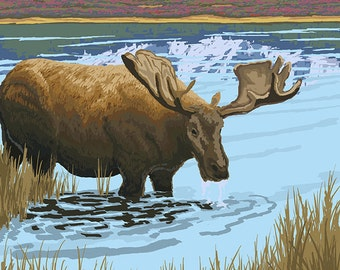 Moose Drinking at Lake - Ketchikan, Alaska (Art Prints available in multiple sizes)