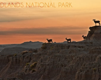 Badlands National Park, South Dakota - Rams on Ridge (Art Prints available in multiple sizes)