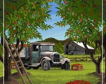 Washington - Apple Harvest (Art Prints available in multiple sizes)
