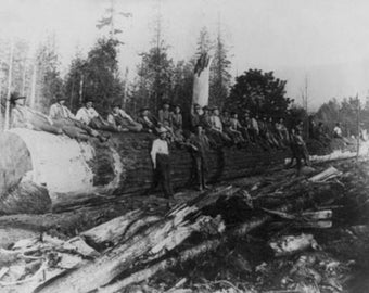 Group of Lumberjacks on Large Log Photograph (Art Prints available in multiple sizes)