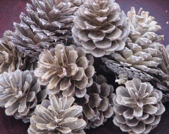 Bleached Pinecones - set of 18 -  for bowl fillers, wreath making, centerpieces or craft supplies