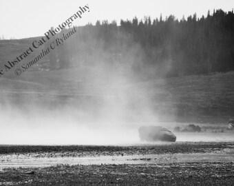 Buffalo Black and White Photography, Wildlife Wall Decor, 4x6 5x7 8x10 11x14